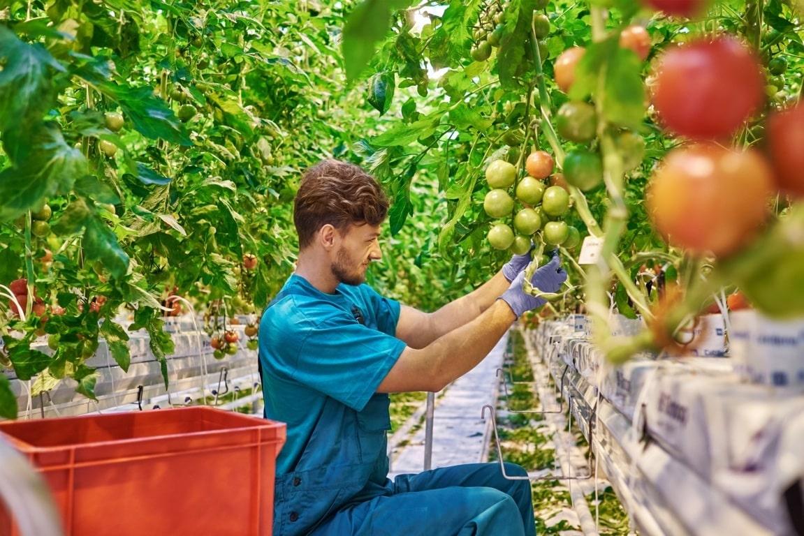 La Agricultura española, más allá del coronavirus. Por Eduardo Moyano Estrada (IESA-CSIC)