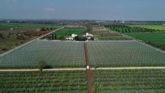 Arrigoni presenta sus mallas contra granizo y plagas para frutales de hueso
