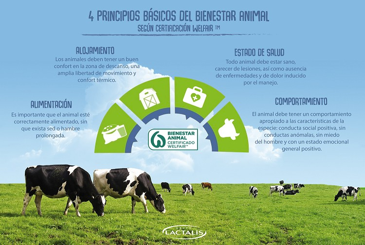 Lactalis certifica a 900 granjas en bienestar animal