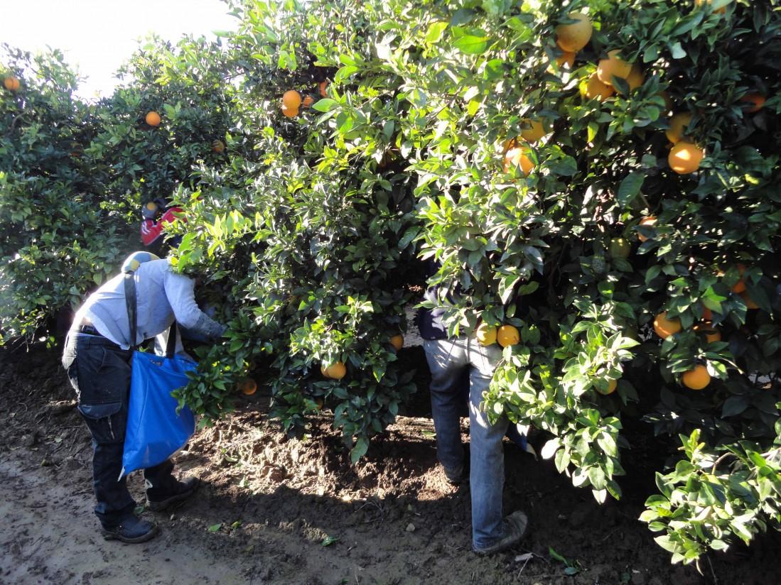 El RD-Ley 19/2020 amplía hasta el 30 de septiembre las medidas extraordinarias sobre empleo agrario temporal