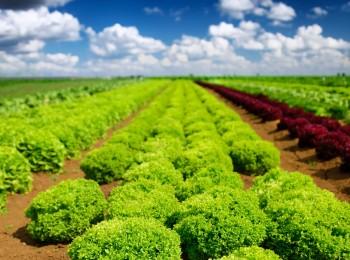 YaraVita Biotrac, la solución de Yara al estrés abiótico de las plantas