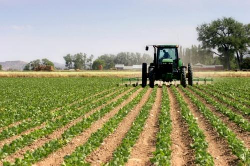ASAJA acusa a la CE de ceder a presiones ecologistas y poner en riesgo la seguridad alimentaria de la UE