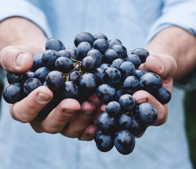 Asaja Ciudad Real alerta sobre cláusulas engañosas en los contratos de compra-venta de uva