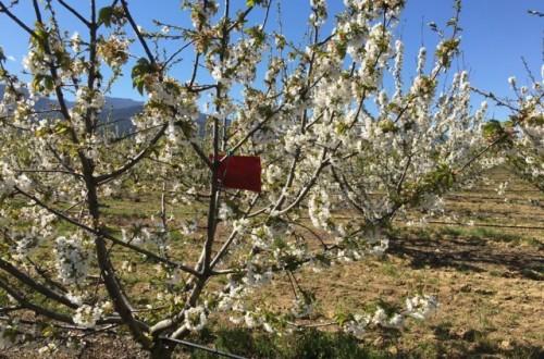Uso de las feromonas como herramienta eficiente en la transición hacia una agricultura sostenible