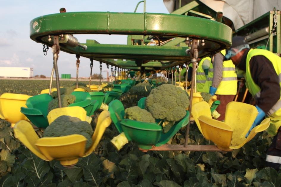 España multiplica por diez el consumo de brócoli en diez años
