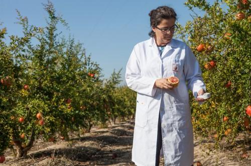 Seguridad Alimentaria. Importancia de la Formación en Calidad Alimentaria