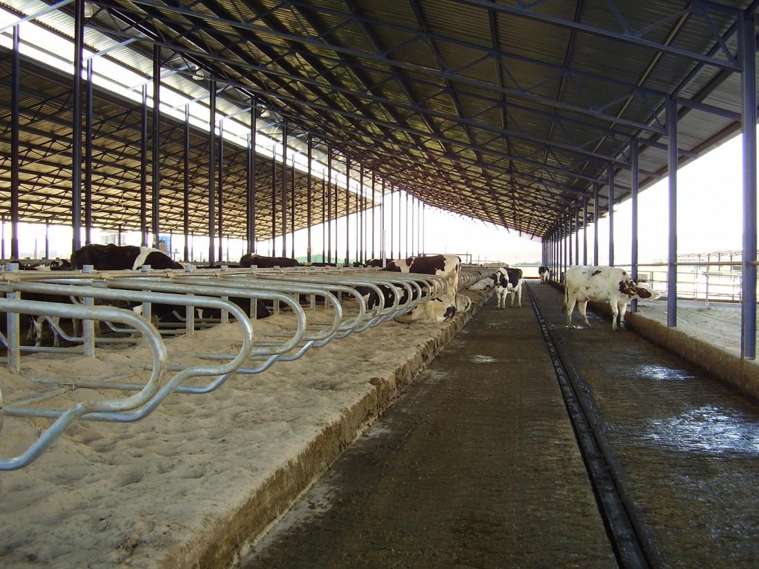 Limpieza y desinfección en explotaciones ganaderas