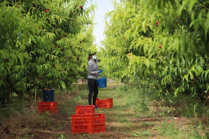 Aefa reparte más de 85.000 mascarillas a los trabajadores del campo