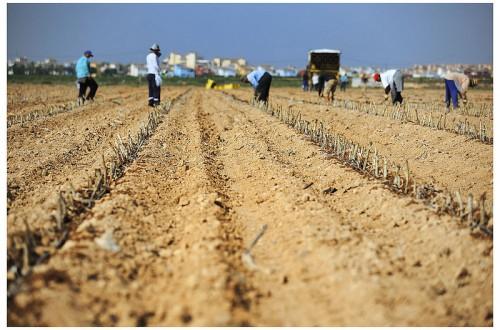 Breves apuntes sobre el trabajo de los asalariados agrícolas*. Por Eduardo Moyano Estrada