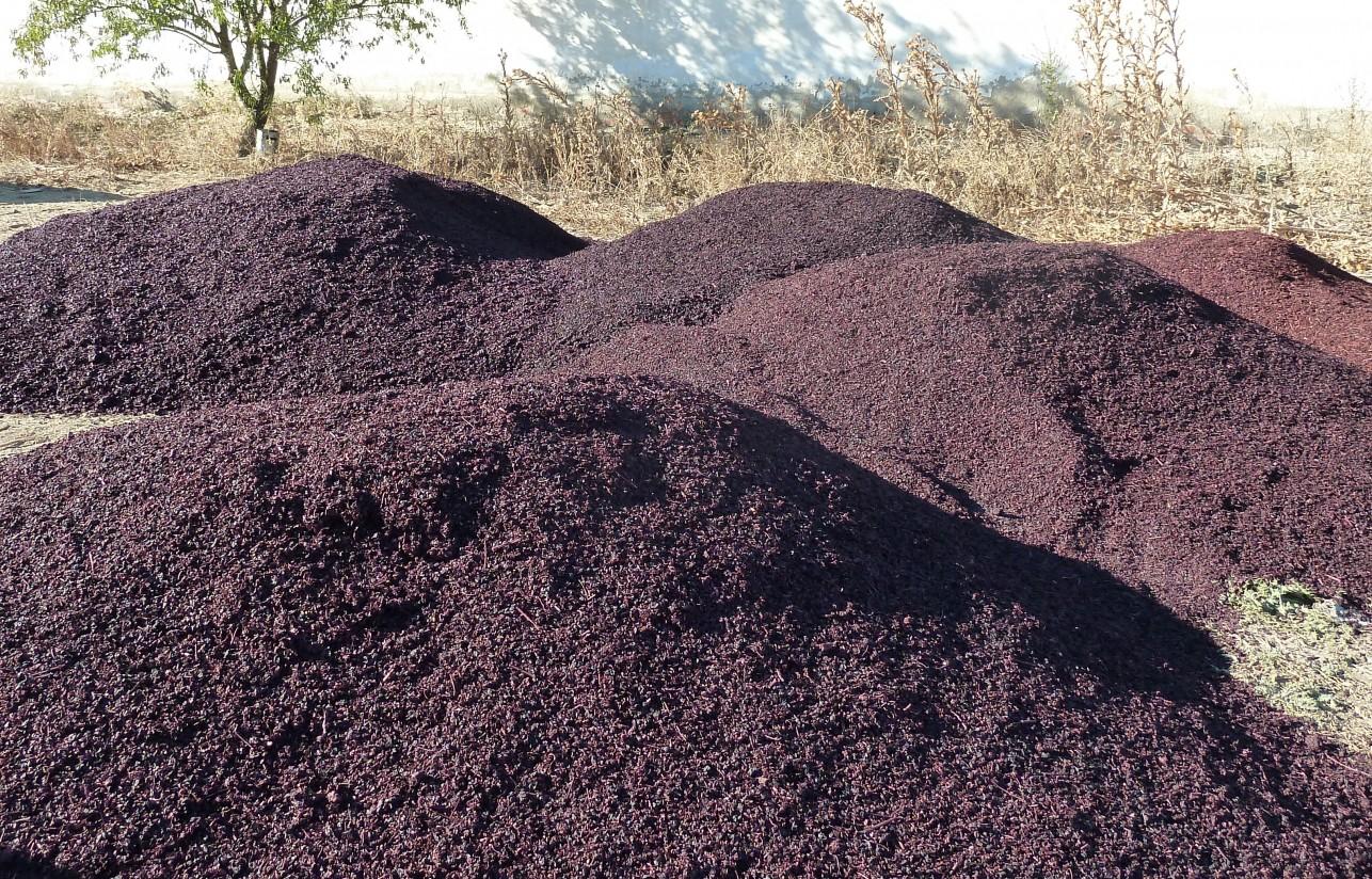 Orujo de uva en la alimentación del ganado ovino lechero