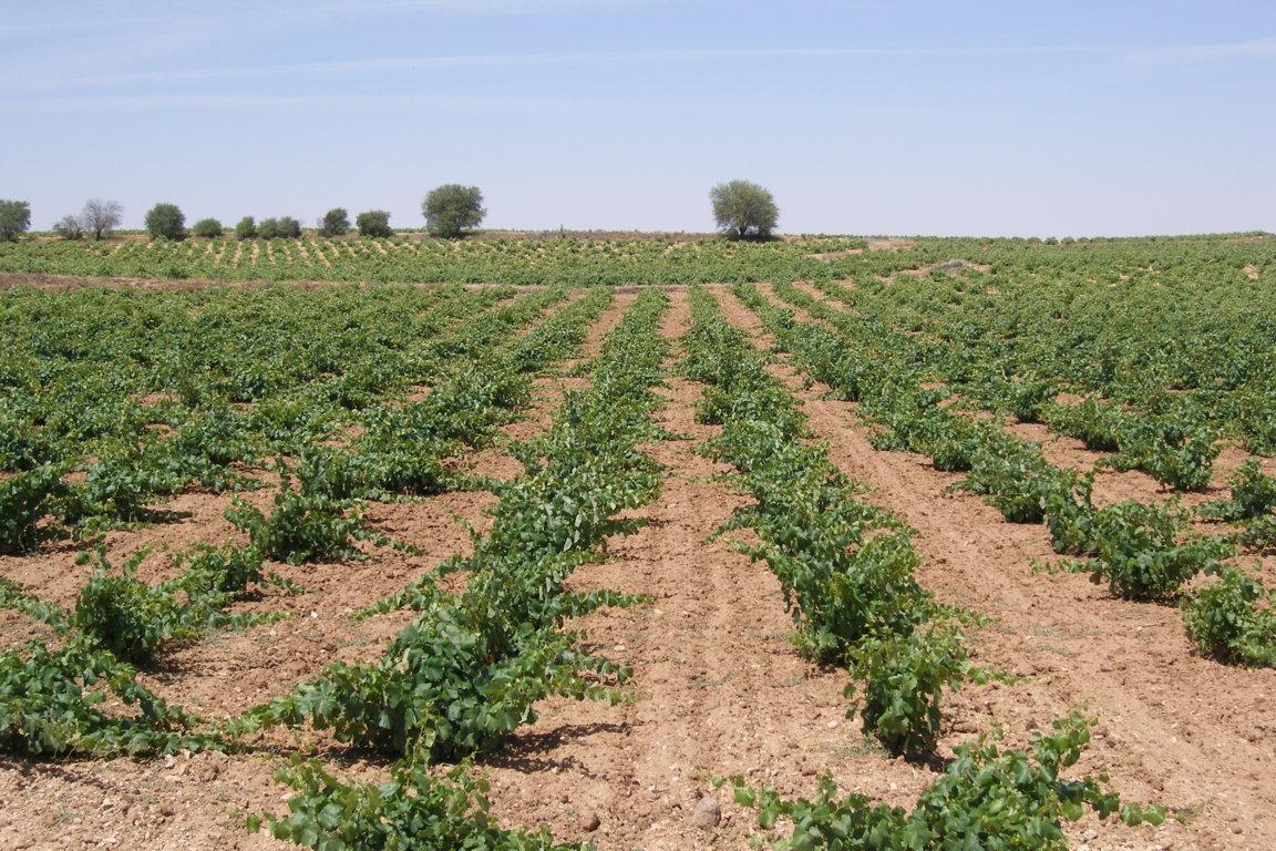 El PE da luz verde a solo parte de las ayudas a los sectores hortofrutícola y vitivinícola