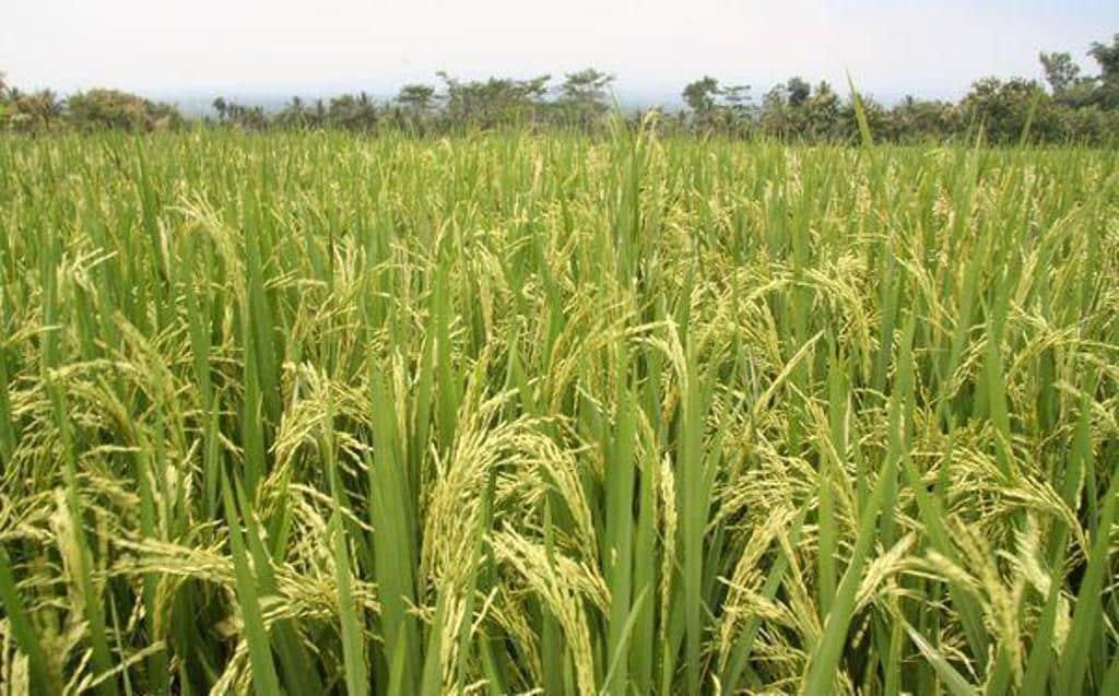El FEGA constata estabilidad en las ayudas PAC asociadas a cultivos y a ganadería entre 2015 y 2019