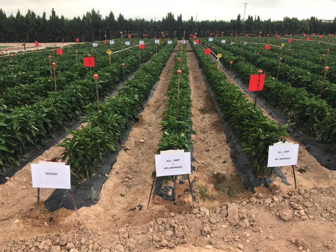 El CDTA presenta los primeros resultados de los ensayos en pimiento con dos productos de Asfertglobal
