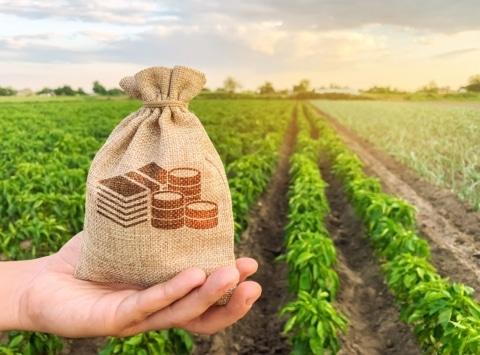 Covid-19: el CESE insiste en crear un fondo extraordinario en apoyo del sector agrario
