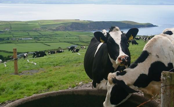 Situación actual en España y medidas de control de las trematodosis bovinas