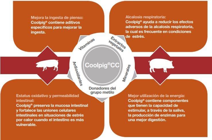 Cargill desarrolla Coolpig CC, una nueva estrategia nutricional para combatir el estrés por calor en cerdos