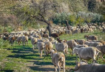 Sincronización de ciclos con protocolos más adecuados al bienestar y la salud animal
