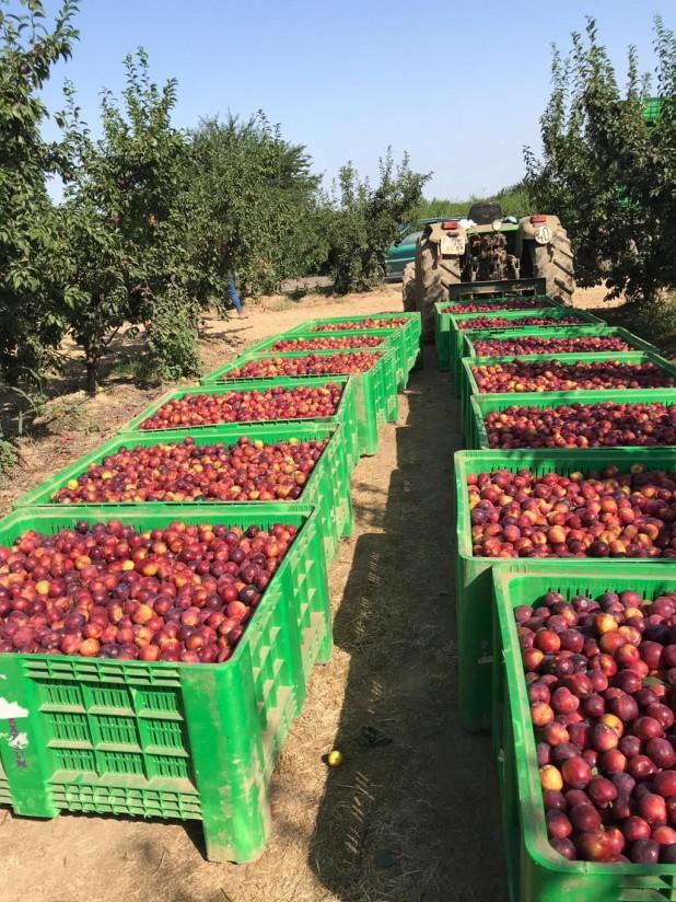 La exportación hortofrutícola crece un 13,5% en abril y cae un 2% en volumen