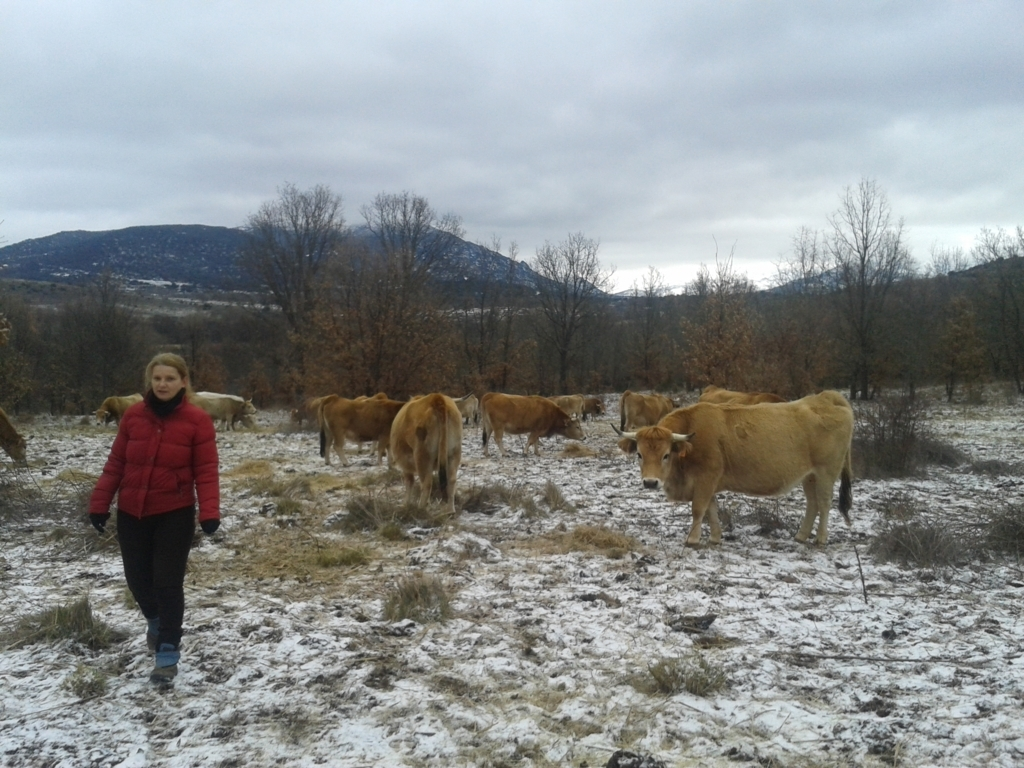 Castilla y León: 66 M€ más de ayudas a incorporación de jóvenes agricultores y de inversión en el agro