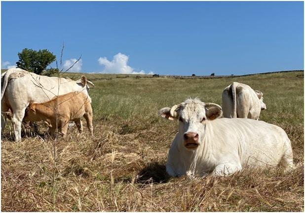 Provacuno lanza la estrategia 'Carbono Neutral 2050' para contribuir a la preservación del entorno