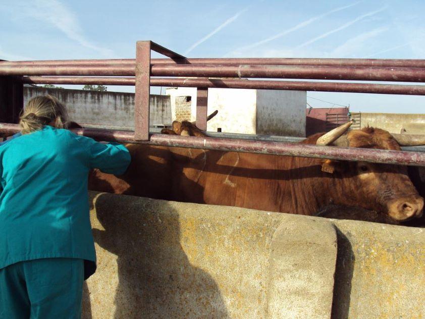 La OCV exige reforzar las condiciones de seguridad en los saneamientos ganaderos