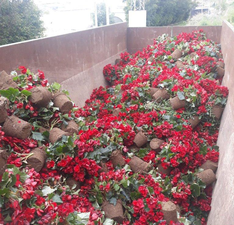 Covid-19: el MAPA eleva a consulta el proyecto de RD de apoyo al sector de flor cortada y planta ornamental