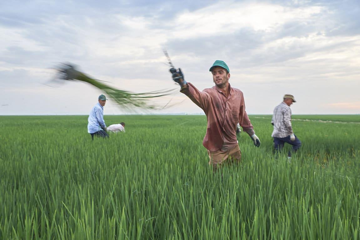 El sector agrario, uno de los más valorados en la pandemia