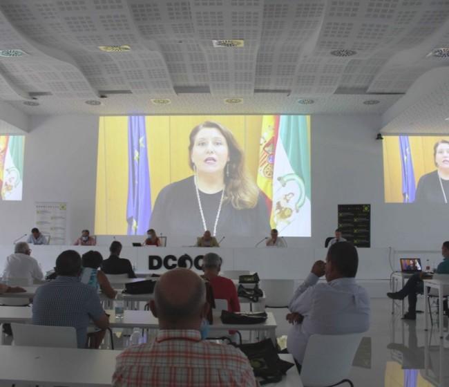 Cooperativas andaluzas pierden un 7% de su facturación global en 2019