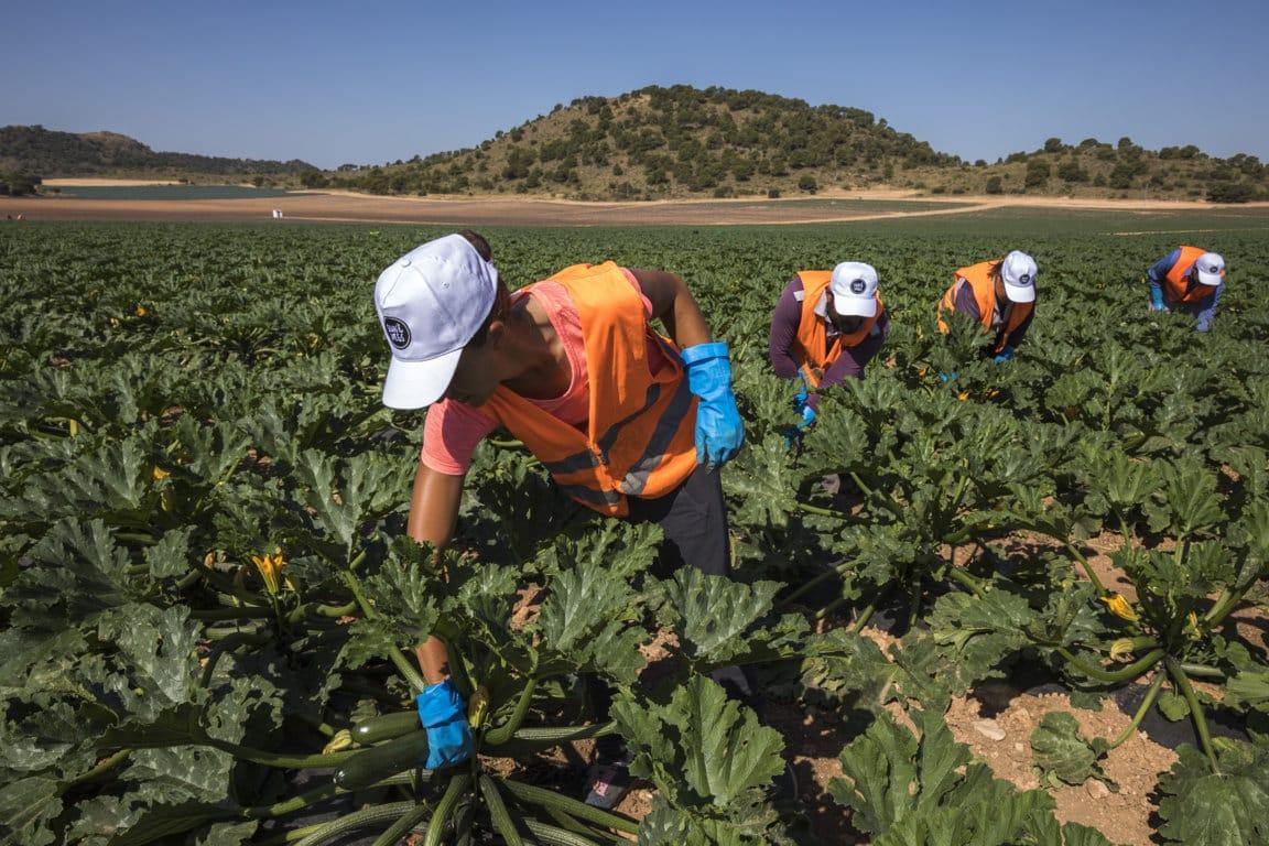 El paro de trabajadores por cuenta ajena en Agricultura subió con fuerza durante junio