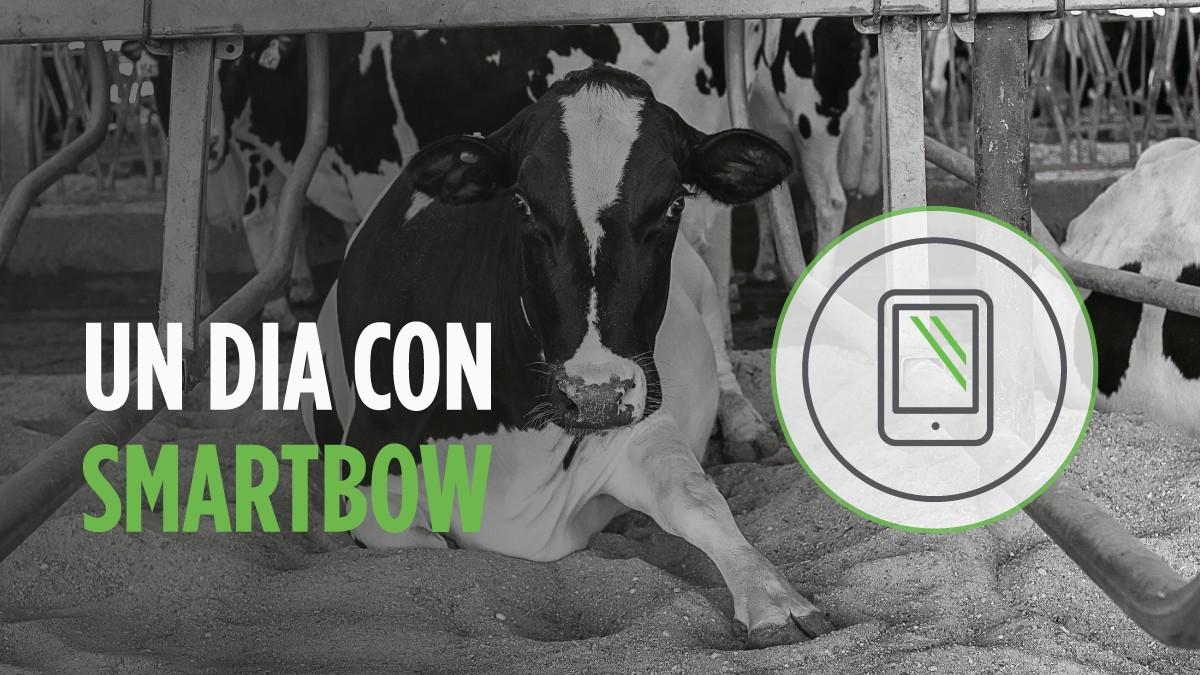Smartbow, el sistema de monitorización en vacuno lechero que facilita el trabajo al ganadero