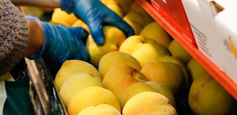 UPA denuncia ante la AICA a centrales hortofrutícolas por abusar en la negociación de los agricultores