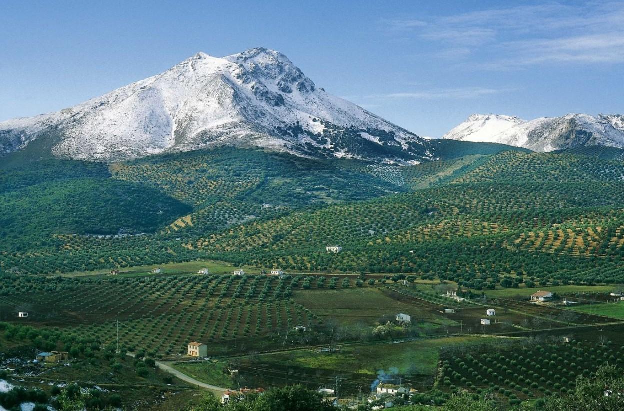 El mercado podría haber absorbido más de 144.000 t de aceite de oliva en junio