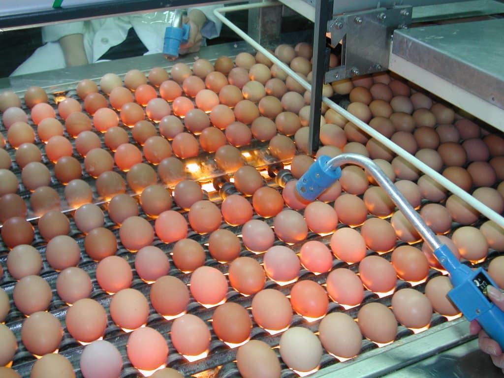 Informe favorable a la primera extensión de norma del sector del huevo