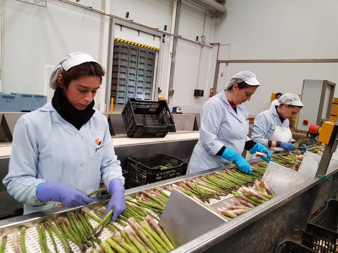 Las cooperativas agroalimentarias siguieron creando empleo en el medio rural, pese a bajar su facturación en 2018