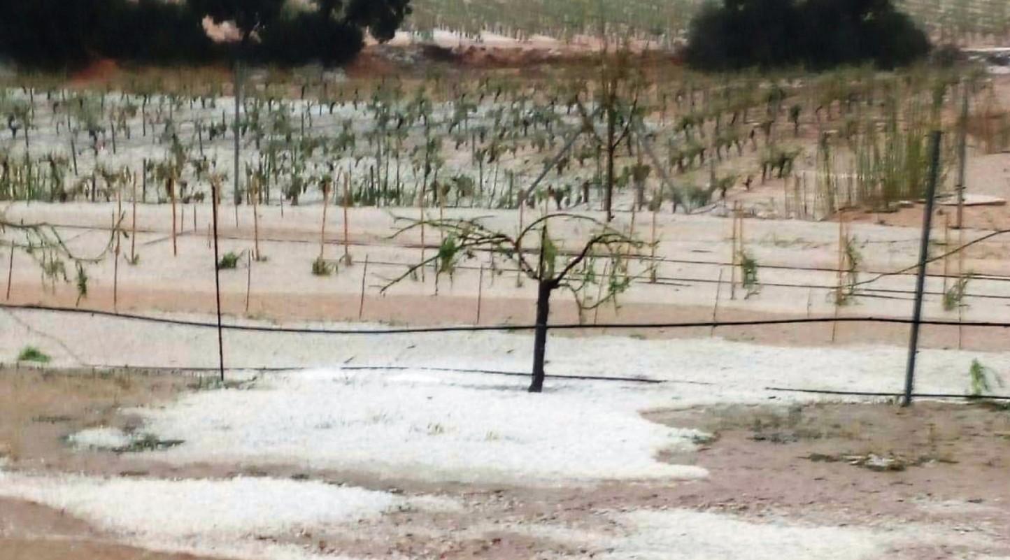 Cajamar crea una línea de 30 M€ para los afectados por el granizo en Utiel-Requena