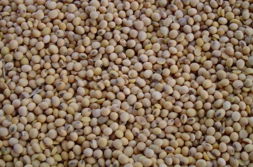 Los fabricantes de piensos trazarán el mapa nacional de utilización sostenible de la soja