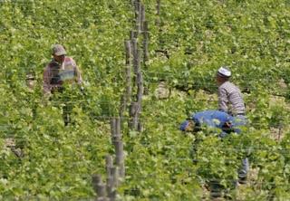 El Gobieno de La Rioja presenta su protocolo de campañas agrícolas seguras