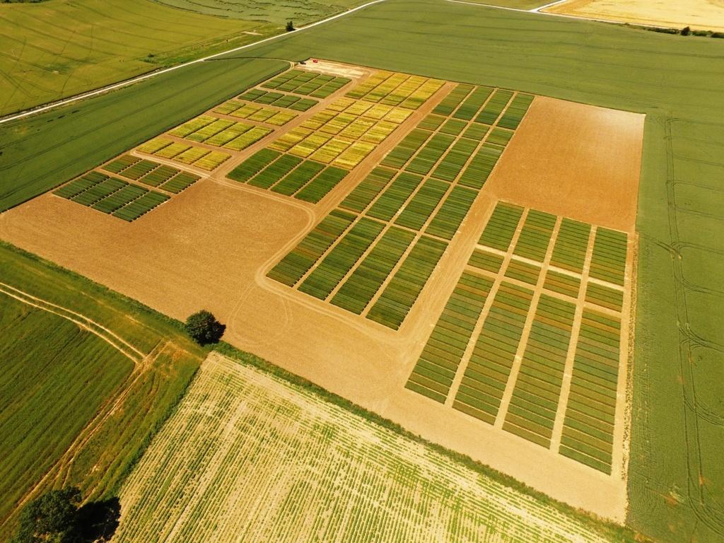 Buenas producciones de cereales en toda Navarra