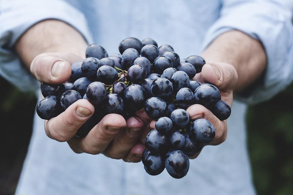 La OIVE pide fondos nacionales y comunitarios extra para no dejar caer al sector vitivinícola español