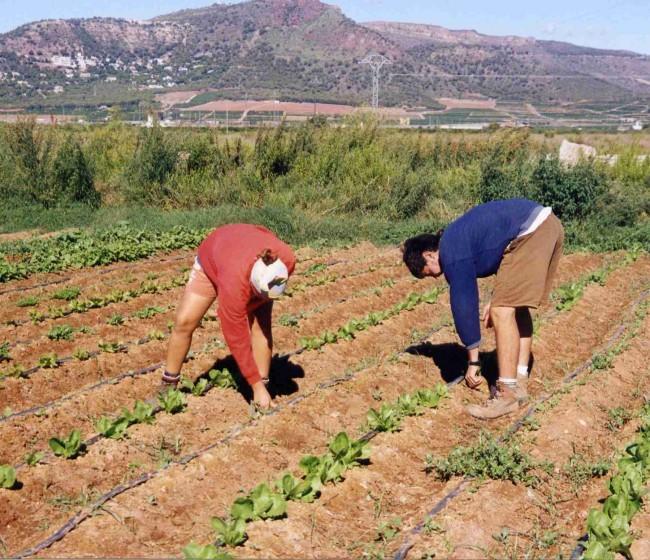 La Agricultura fue la única actividad económica que elevó el paro registrado en julio
