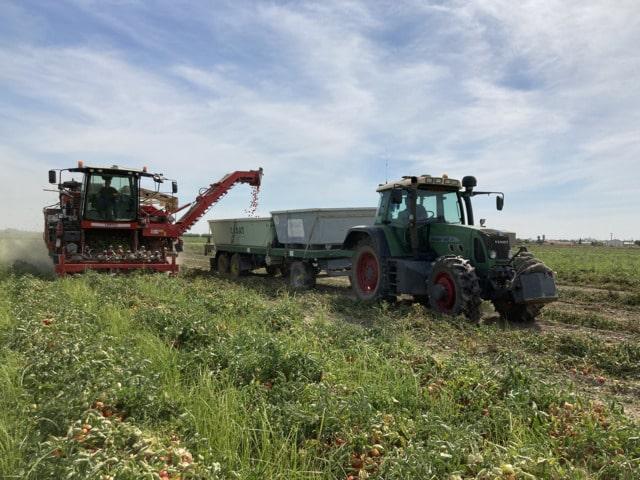 Nuevo monitor de rendimiento para cosechadoras de tomate de industria de Agrosap