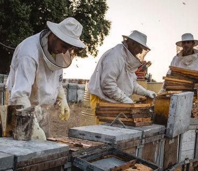 UPA-UCE alerta de la situación en jaque de la apicultura