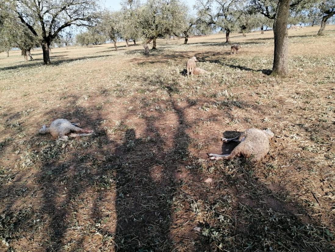 Las lluvias dañan 24.000 hectáreas agrícolas, sobre todo en Extremadura y CLM