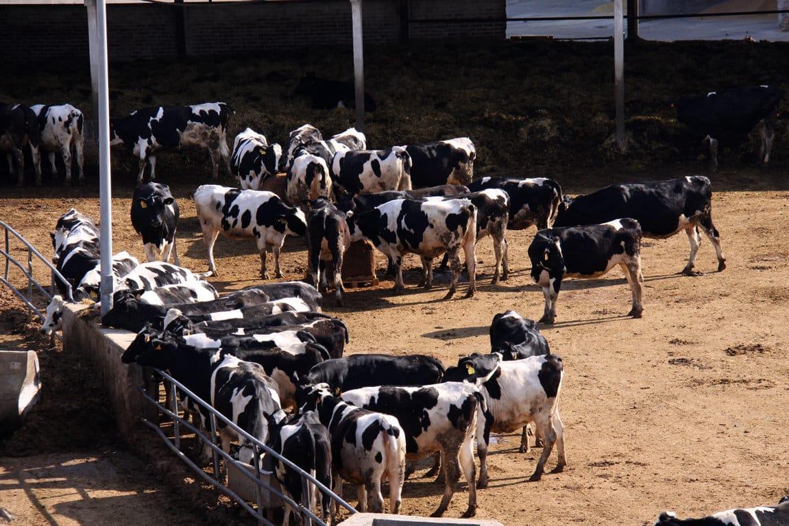 Las entregas de leche de vaca suben un 2,9% en junio con moderado descenso del precio al ganadero