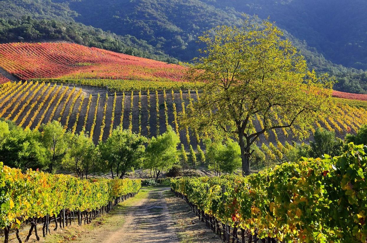 La OIVE pone a disposición del sector el estudio de costes de producción de uva para elaborar vinos en España
