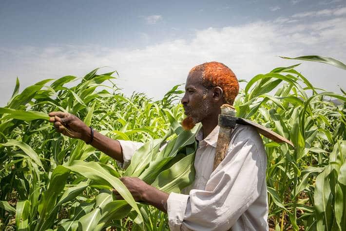 El índice FAO de precios mundiales de los alimentos básicos volvió a subir en agosto