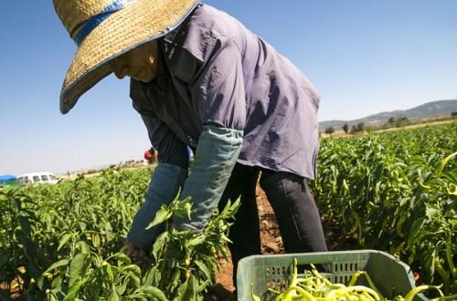 Agricultura fue el único sector de actividad económica que redujo el paro en agosto