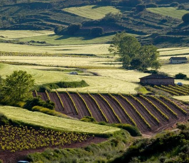 El Ministerio de Agricultura prepara normativa sobre ayudas de la PAC transitoria de 2021 y 2022