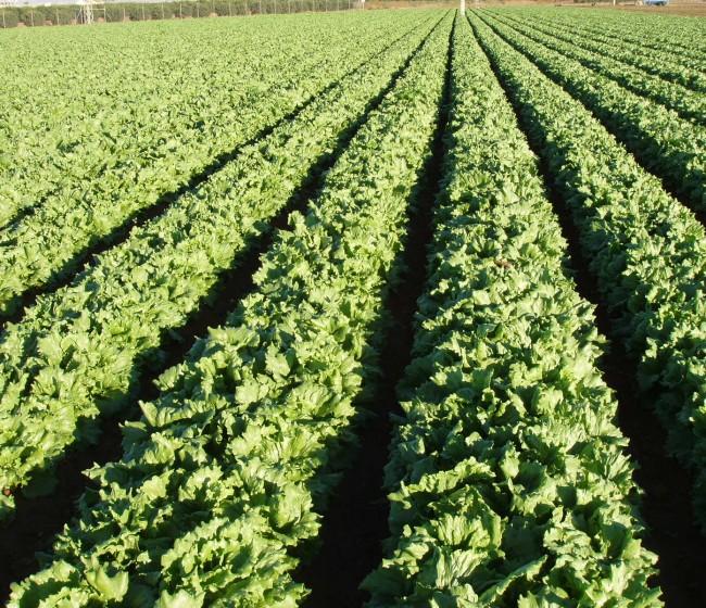 Bioestimulantes y agricultura sostenible