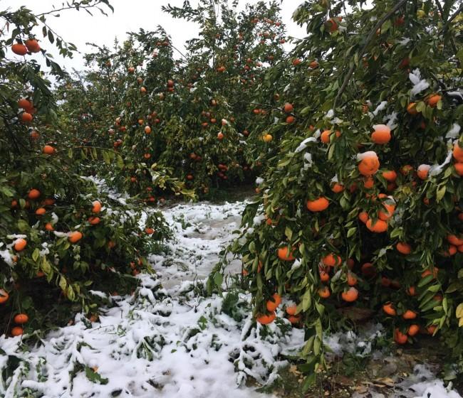 Casi 746.000 ha de cultivos agrícolas asegurados sufrieron siniestros hasta finales de agosto